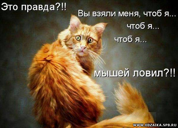 http://xozaika.spb.ru/_ph/7/2/188157930.jpg